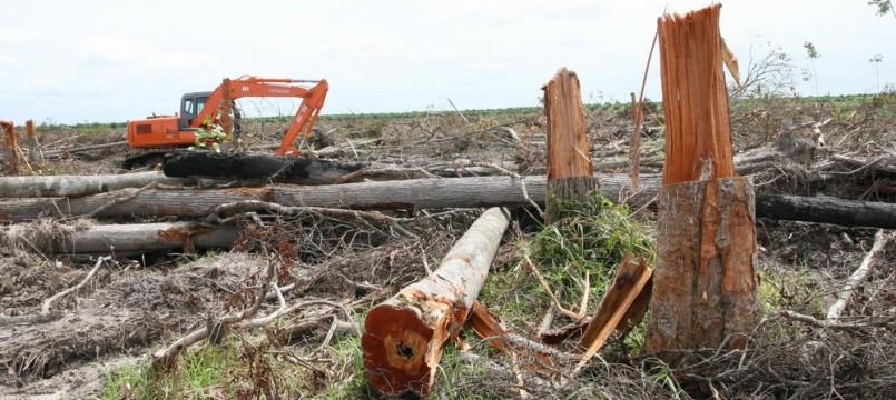 Log Land clearing of PT. KSI II [Wilmar Group]13