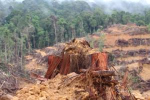 Pembukaan Lahan Sawit oleh salah satu perusahaan Musimas di Kabupaten Barito Utara [taken 10.3.2014]