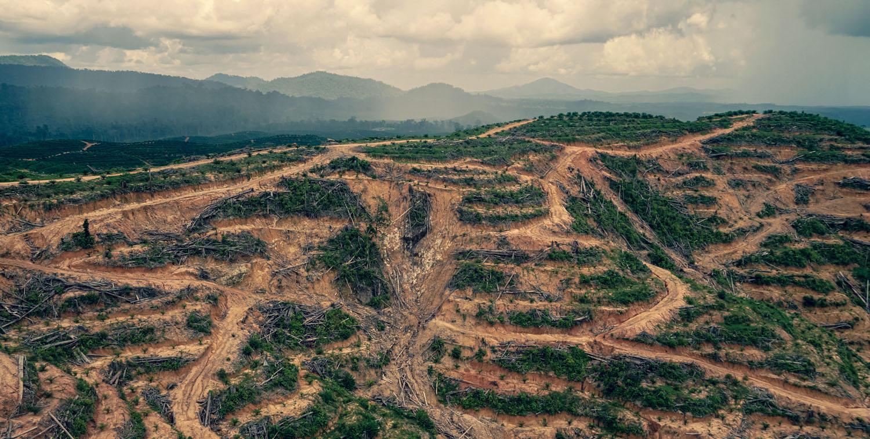 PR Besar Pemimpin Borneo, Menjaga atau Menggunduli Hutan post thumbnail